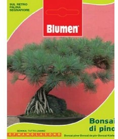 BUSTINA SEMI BONSAI DI PINO