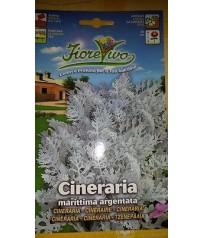 BUSTINA SEMI CINERARIA MARITTIMA ARGENTATA GR 0,20