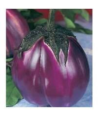 busta semi melanzana violetta di firenze